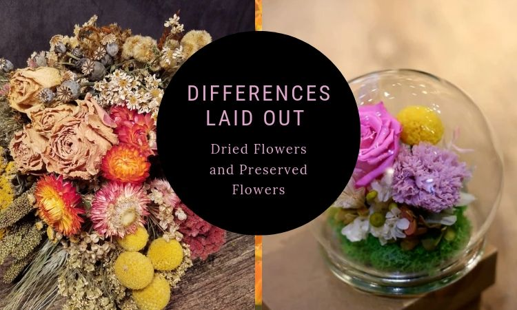 Differences Laid Out : Dried Flowers and Preserved Flowers