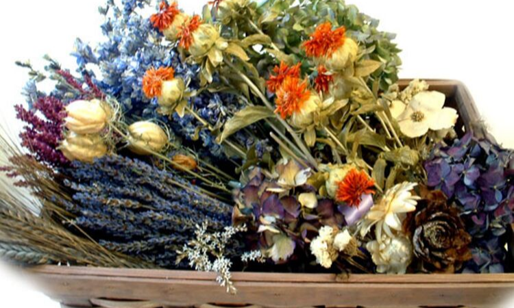 How to preserve flowers for dry flower arrangement