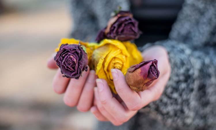 rose guard petals removal
