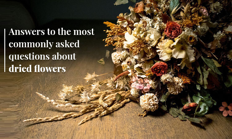 Common questions for dried flowers