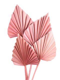 40-02AP-Palm-Spear-Antique-Pink