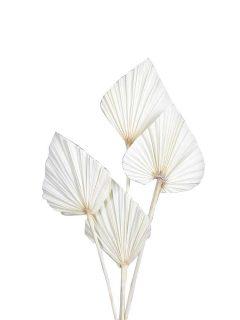 40-02BH-Palm-Spear-Bleach