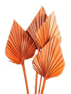 40-02OR-Palm-Spear-Orange