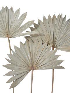 40-03-Palm-Sun-Spear.jpg