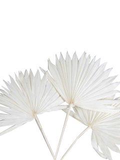 40-04BH-Palm-Sun-Spear-Bleach