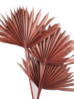 40-04DB-Palm-Sun-Spear-Dark-Brown