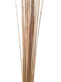 41-02-Golden-Stick-Natural.jpeg