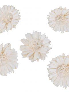 51-04-Sola-Sun-Flower.jpeg