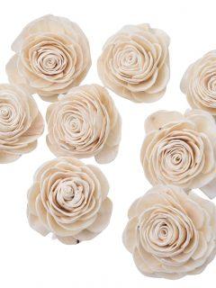 51-13-Sola-Beauti-Rose.jpeg