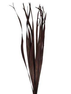 51713-Sun-Palm-Leaves-Dark-Brown