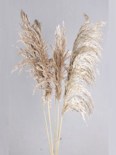 Bamboo-Feather-Large-Natural