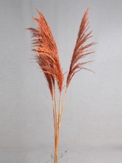 Bamboo-Grass-Large-Direct-Orange