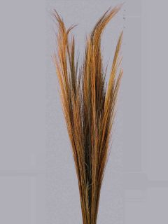 Broom-Grass-Natural