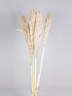 Pampas-120-cm-Natural