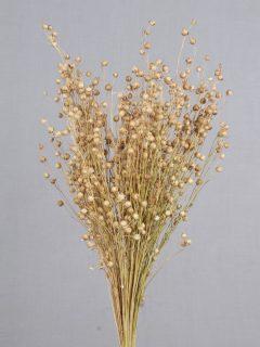 Tishi-Grass-Natural