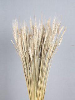 Wheat-Grass-Natural